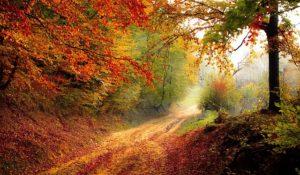Herbst - Glücksdetektiv