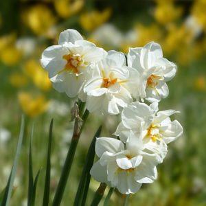 Frühling - Glücksdetektiv