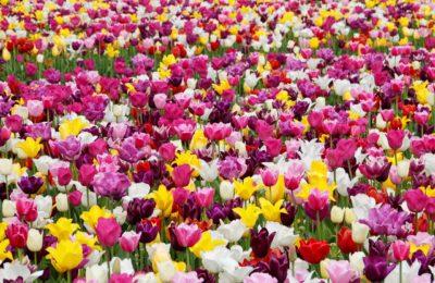 15 Gründe den Frühling zu lieben